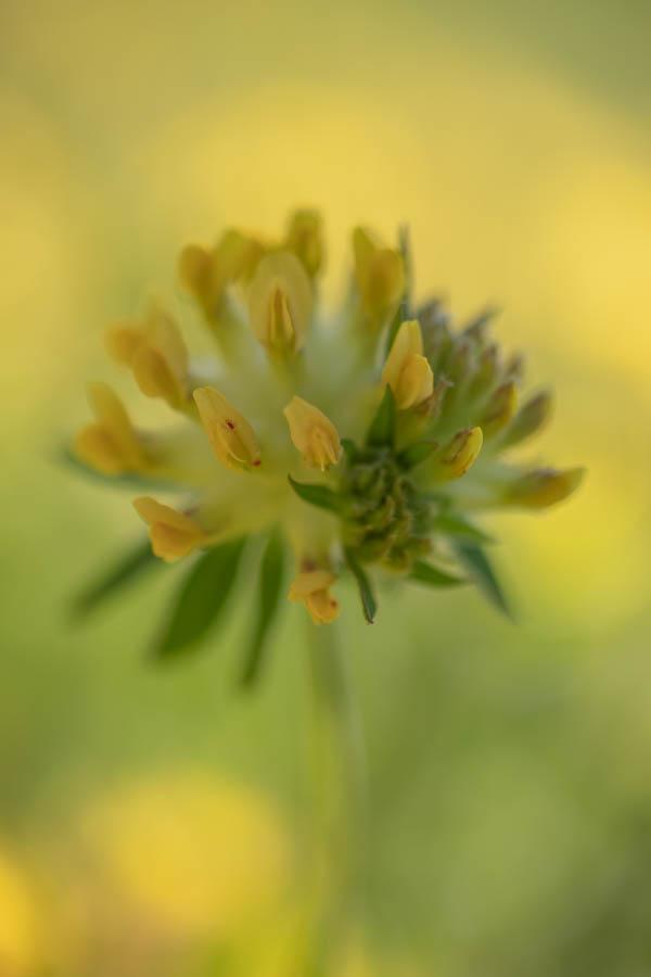 villa-sonnata-omgeving-flora